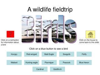 A wildlife fieldtrip