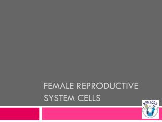 Female reproductive system cells