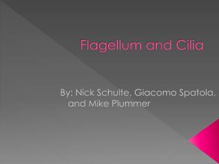 Flagellum and Cilia