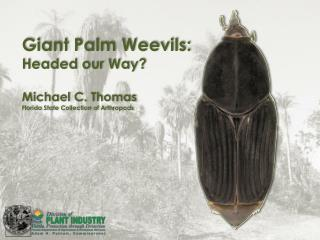 Giant Palm Weevils: Headed our Way? Michael C. Thomas Florida State Collection of Arthropods
