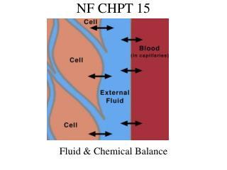 NF CHPT 15