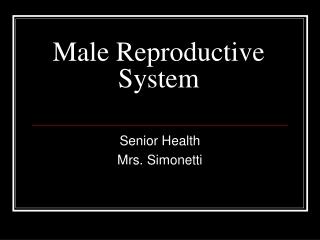Male Genital System Testis  Epididymis
