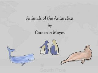 Animals  of the  Antarctica by Cameron Mayes