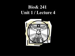Bio& 241  Unit 1 / Lecture 4