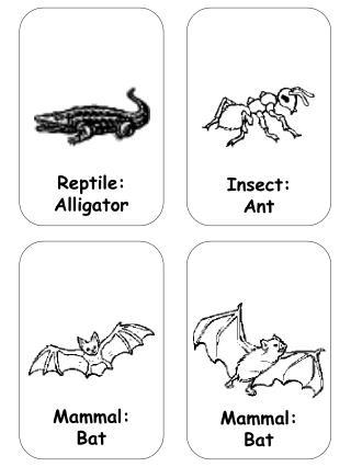 Reptile: Alligator