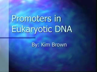 Promoters in Eukaryotic DNA