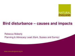 Bird disturbance � causes and impacts