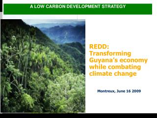 REDD: Transforming Guyana s economy while combating climate change