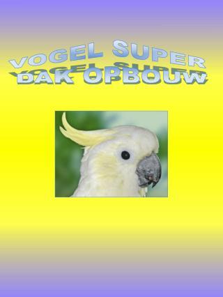 VOGEL SUPER  DAK OPBOUW