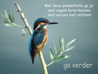 Met deze presentatie ga je  veel vogels leren kennen. Veel succes met oefenen