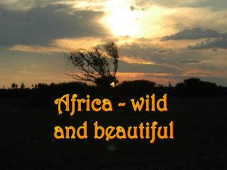 Africa - wild  and beautiful