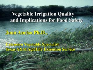Vegetable Irrigation Quality  and Implications for Food Safety Juan  Anciso  Ph.D.,