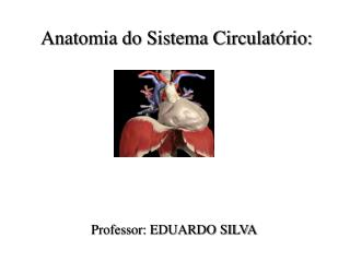 Anatomia do Sistema Circulatório: