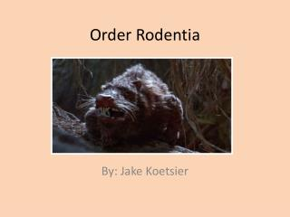 Order Rodentia