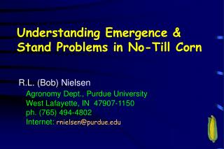 Understanding Emergence  Stand Problems in No-Till Corn