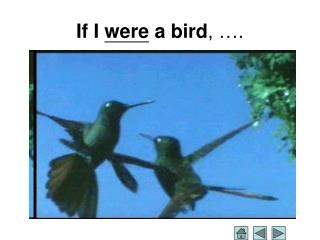 If I  were  a bird , ….