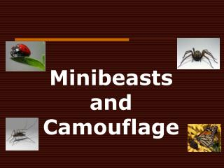 Minibeasts  and  Camouflage