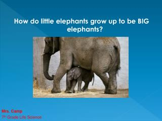 How do little elephants grow up to be BIG elephants?
