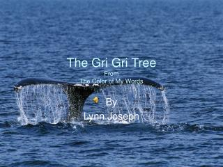 The Gri Gri Tree From  The Color of My Words