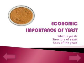 ECONOMIC IMPORTANCE OF YEAST