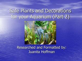 Safe Plants and Decorations for your Aquarium Part 2