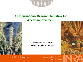 An International Research Initiative for Wheat Improvement