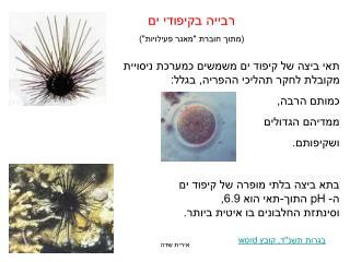 תאי ביצה של קיפוד ים משמשים כמערכת ניסויית  מקובלת לחקר תהליכי ההפריה, בגלל: כמותם הרבה,
