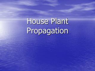 House Plant Propagation