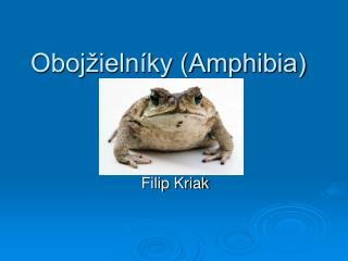 Obojžielníky (Amphibia)