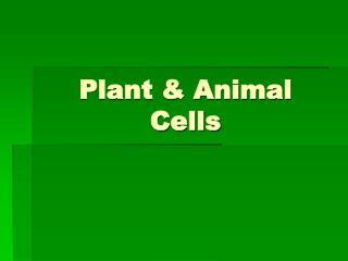 Plant & Animal Cells
