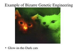 Example of Bizarre Genetic Engineering