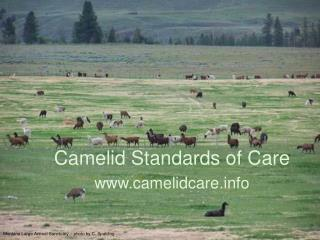 Camelid Standards of Care camelidcare