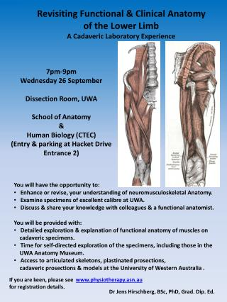 Revisiting Functional & Clinical  Anatomy o f the Lower Limb  A Cadaveric Laboratory Experience