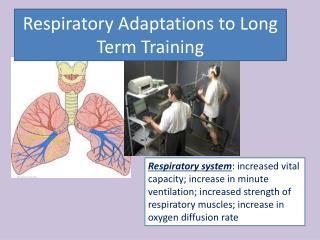 Respiratory Adaptations  to Long Term  Training