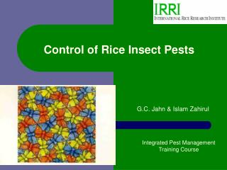 Control of Rice Insect Pests
