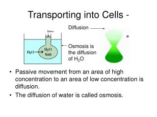 Transporting into Cells -