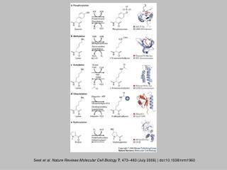 Seet  et al. Nature Reviews Molecular Cell Biology 7 , 473 – 483 (July 2006) | doi:10.1038/nrm1960