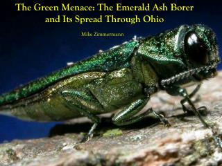 The Green Menace: The Emerald Ash Borer and Its Spread Through Ohio