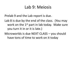 Lab 9: Meiosis