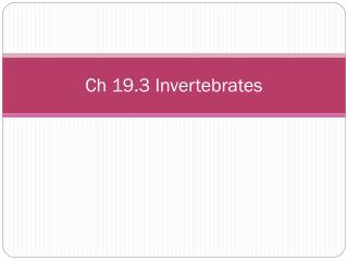 Ch 19.3 Invertebrates