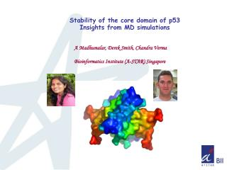 Stability of the core domain of p53 Insights from MD simulations
