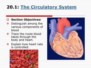 20.1: The Circulatory System