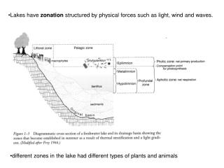 Lakes have  zonation  structured by physical forces such as light, wind and waves.