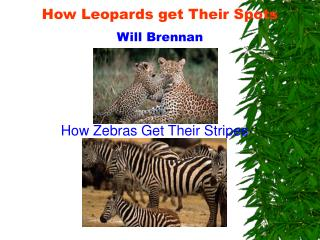 How Leopards get Their Spots Will Brennan