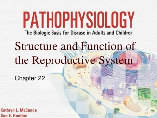 Chapter 24  The Male Reproductive System