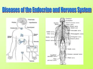 Diseases of the Endocrine and Nervous System