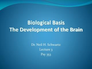 Biological Basis The Development of the Brain