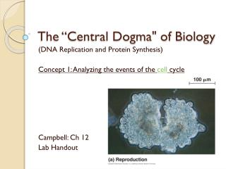 """The """"Central Dogma"""" of Biology"""