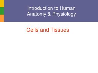 Introduction to Human  Anatomy & Physiology