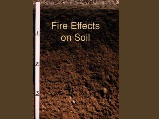 Fire Effects  on Soil